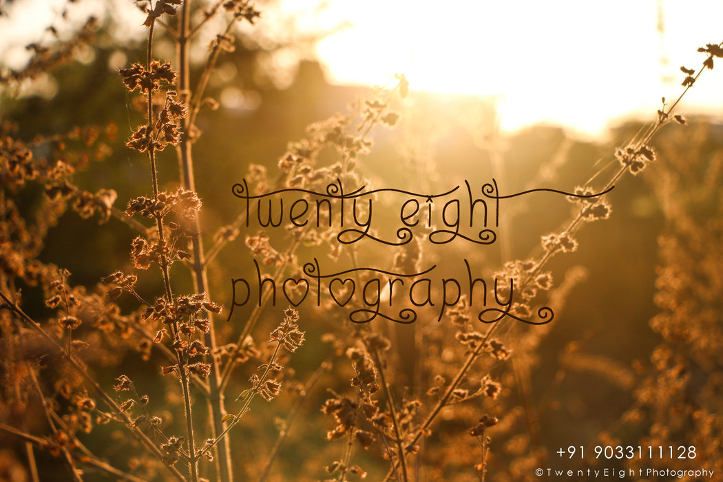 Twenty Eight Photography