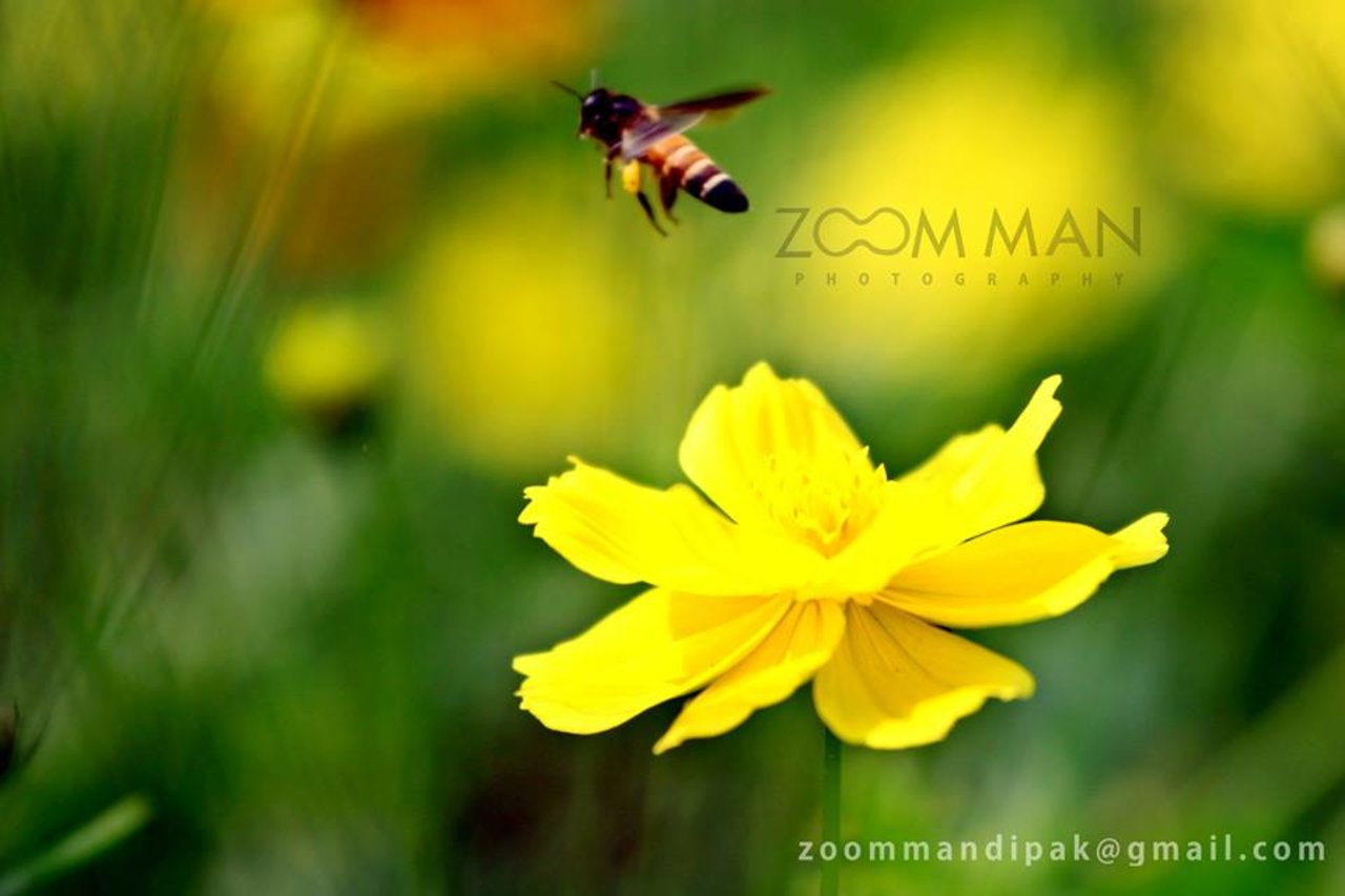 Zoom Man Photography